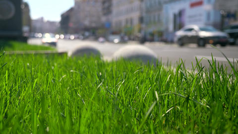 Macro Green Grass On City Street Close-up Cars Vehicles Wheels Urban Green Space Buildings Vehicles Live Action