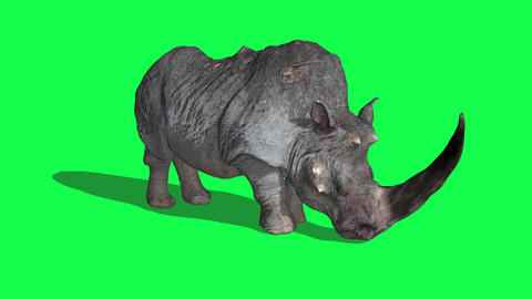 Rhinoceros idle and attack on Green Screen 3D Rendering Animation Animals Animation