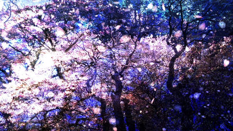 Cherry Blossoms 357 Animation