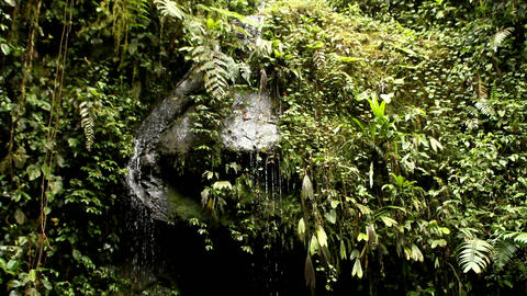 Rainy cloud forest Stock Video Footage