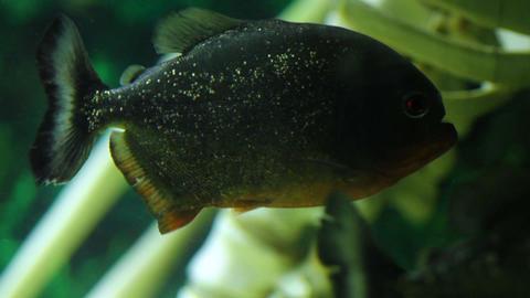 FISH AGUARIUM