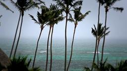 Hurricane Palm Trees Stock Video Footage