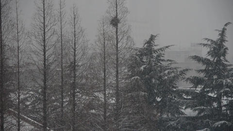 Forest & falling snow Stock Video Footage