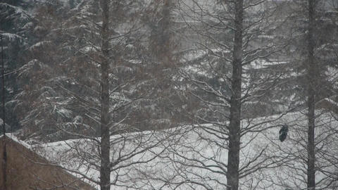 falling snowflake,house roof & forest Stock Video Footage