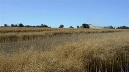 Harvesting a Canola Crop on an Australian Farm Stock Video Footage