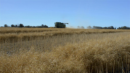 Harvesting a Canola Crop on an Australian Farm Stock Video Footage