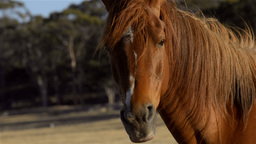 Horse Staring at the Camera Stock Video Footage