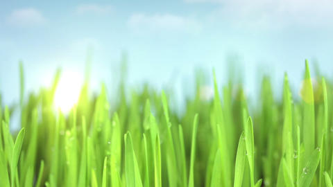 Sun above the grass Stock Video Footage
