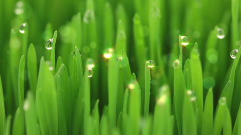 Droplets and bubbles in the grass Stock Video Footage