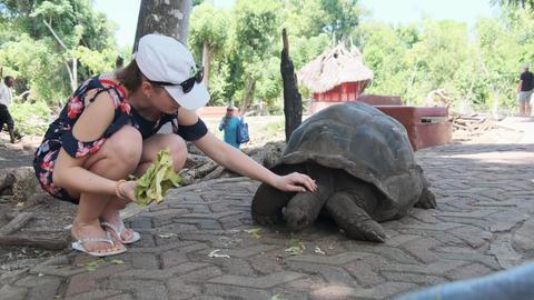 Woman Feeding a Huge Aldabra Giant Tortoise on Prison Island, Zanzibar, Africa Live Action