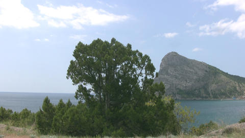 Pine, Sky, Sea, Mountains stock footage