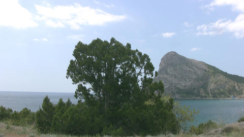 Pine, sky, sea, mountains Stock Video Footage