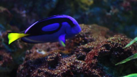 FISH AGUARIUM 1