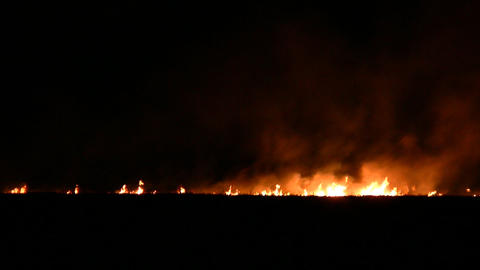 Night fire in the field Stock Video Footage