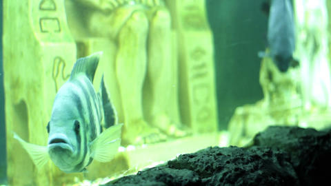 aquarium fish Footage