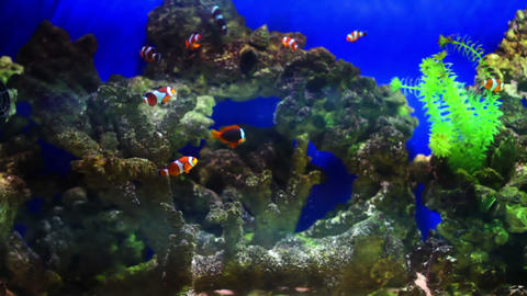 aquarium fish Archivo