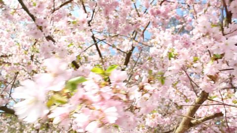 Springtime Stock Video Footage