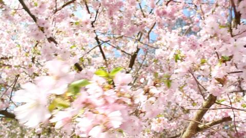 Springtime Stock Video Footage