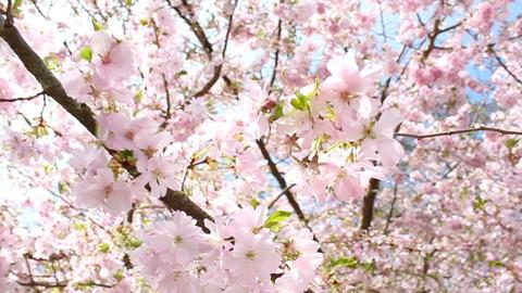 Springtime Footage