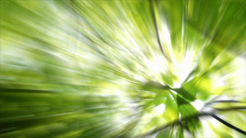 Green Nature Stock Video Footage