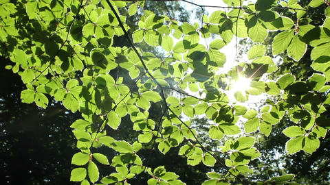 Green Leaves Stock Video Footage