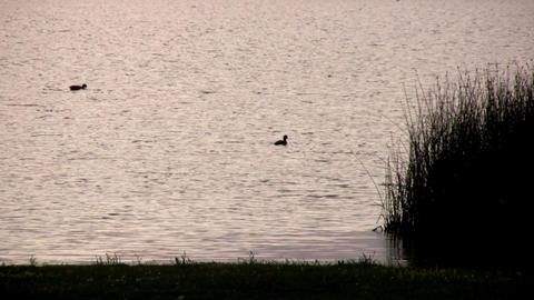 Lake at sunset Stock Video Footage