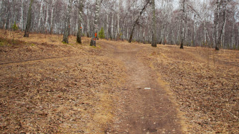 Walk in the woods, Time Lapse Stock Video Footage