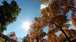 Autumn Trees stock footage