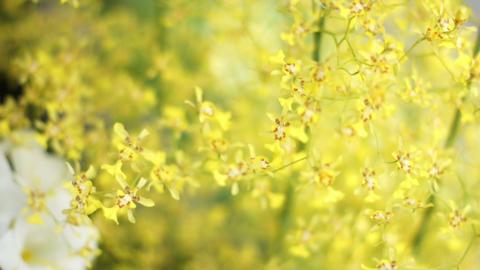 Flower 花 0