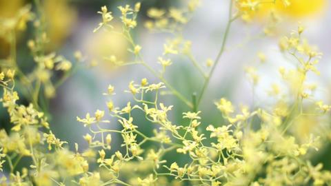 Flower 花 1