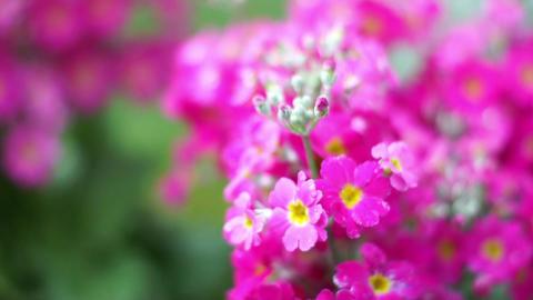 Flower 花 2