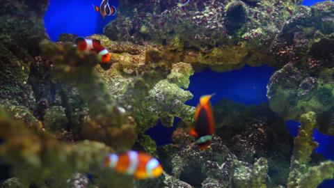 aquarium fish Stock Video Footage