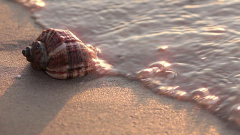 Seashell On The Beach. Close-up stock footage