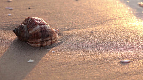Seashell on the beach. Close-up Stock Video Footage