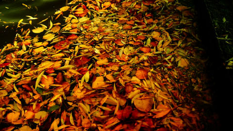 Leaves Floating On The Waves stock footage