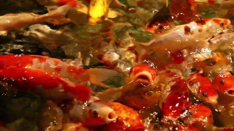 Big goldfish Stock Video Footage