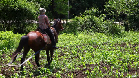 Ploughed and horse Stock Video Footage