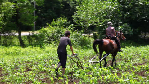 Ploughed and horse Footage