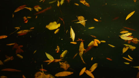 leaves floating on the waves Footage
