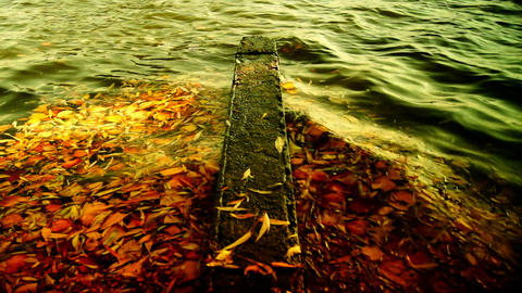 leaves floating on the waves Stock Video Footage