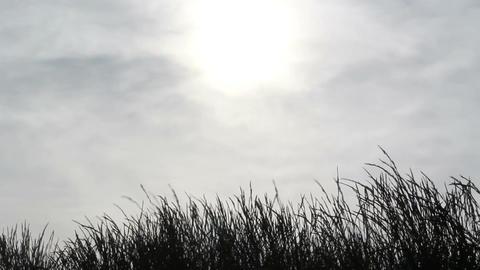 Dark Grass Stock Video Footage