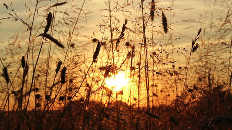 Sunset Meadow stock footage