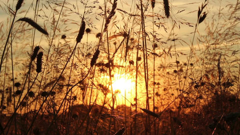 Sunset Meadow Stock Video Footage