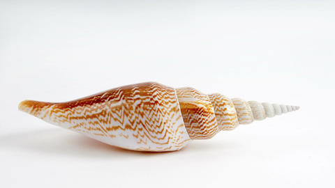 Beautiful Hi-Key Seashell stock footage