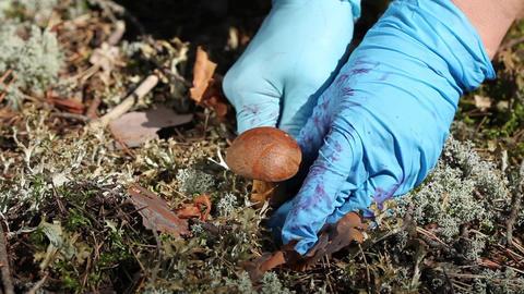 mushroom in nature Stock Video Footage