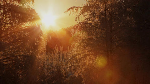Beautiful sun rising in winter forest Footage