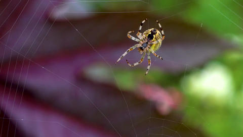 The Spider Weaves its Net. Insects in Nature. Save Nature Live Action