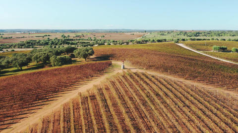 Aerial scenic view over beautiful lush landscape with neat rows of dark vineyard Live Action