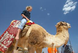camel riding Photo