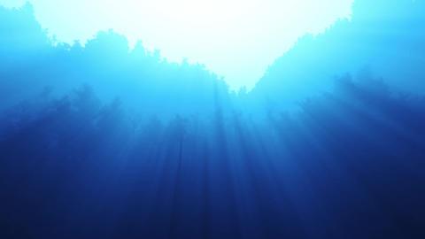 Twinkling sunlight streaks in night forest Stock Video Footage